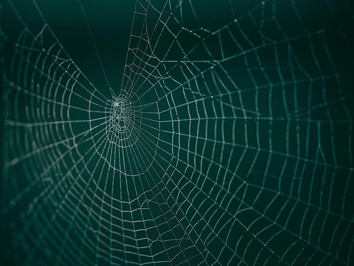 Un algorithme de toile d'araignée image
